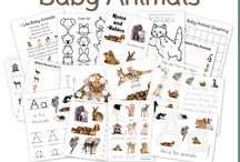 Baby Animals Theme / by Anne B