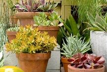 Make my garden grow / by Sarah Jones