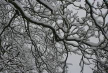 Winter Inspiration / by Kelly Krueger