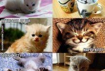 Kitties / by Mahlon Parks