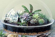 Ꮦantalizing *⁀*Ꮦerrariums / Bottled up botanicals! / by Sandra Lee Larsen