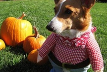 Dogs in Costumes / by Sara Thompson