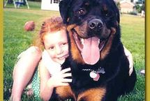 Rottweilers / by Melissa Levers-Raymond
