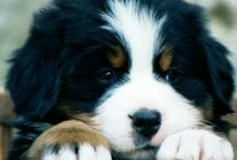 Puppies / by Caitlin Spencer