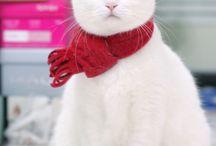 Pussy Cat, Pussy Cat / by Linda McDermitt