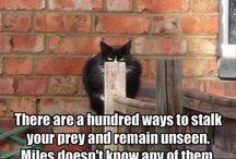 So funny!!! / by Kelly Redleaf