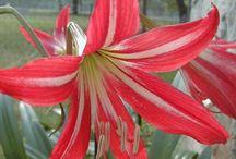Heard Plant Sale Plants 2013  / by Heard Natural Science Museum & Wildlife Sanctuary