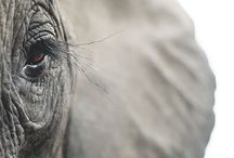 Elephants / by Doreen Johnson