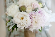 Bridal bouquet / by Bethany Carnevale