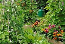 garden / by Catherine Desharnais