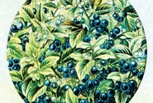 Gardening: Heirloom & non-GMO seeds / by Kristy Tillman