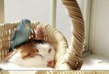 Cute Pet Pics / by PetSolutions Pet Supplies