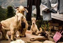Nepal / by Gillian Duffy