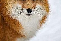 Animals / by Devon Mattocks