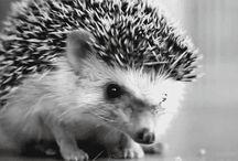 Hedgehogs!!!! / by Michelle Tran