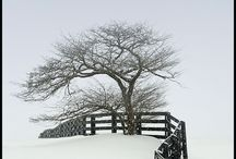 Winter / by Cees Bol