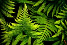 Ferns / by Becca Andrade