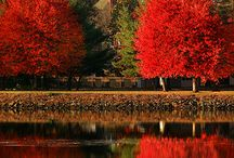 Awesome Autumn / by Denise Crawford