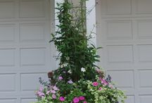Container planting / by Annette Brown