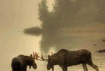 Wildlife / by Staci Ewing