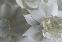 paper flowers / large white flowers / by Cindy Steenblik
