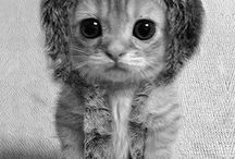Too cute / Cute animals :3 / by S Cotton