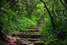 Paths / by Bonnie Bjorge Endres