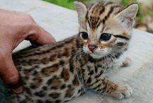 Cute animals :) / by Missy Rayburn