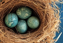 Nests, Eggs, Feathers... / by Loralea Kirby