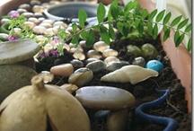 Fairy Garden Inspiration / by Clara Alexander-Fennell