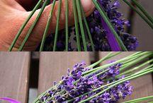 Lavender / by Briar Leigh