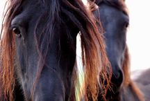 Horses, they leave hoof prints on your heart <3 / by Horse Love