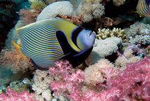 underwater / by nandhini karthic