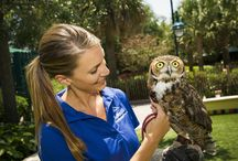 SEA Garden / Share the wonder of close-up encounters with amazing animal friends and learn how SeaWorld cares for the natural world at the all-new SEA Garden. Completely re-designed, the SEA Garden is where guests can learn more about SeaWorld's animals, many of them rescued, including eagles, spoonbills, opossums, and more. / by SeaWorld