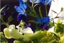may wedding, blue ridge of va / by Gentle Gardener Green Design