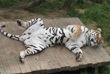 sleeping animals / by lark