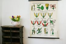 botanical poster obsession / by Maybelle Imasa-Stukuls