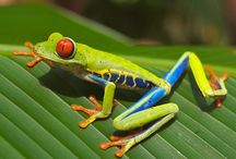 Nature on Artkick / Animals, plants and the natural world on Artkick.   / by Artkick