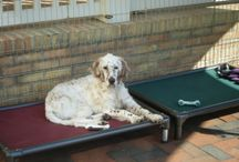 English Setter / English Setters and their Kuranda beds / by Kuranda Dog Beds