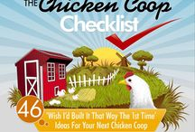 Wicked Chickens / Chickens, Coops and Upkeep / by Kimberly Huber