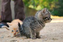 cute animals / by Courtneyy Bartlett