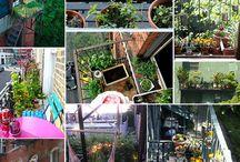 Urban Garden / by Suu P