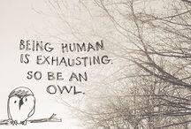 Owls / by Brenda Derbin