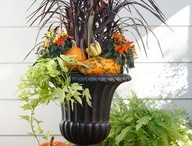 Front porch curb appeal / by Cari Kelley