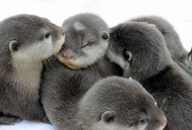 Otters / by Karen Otto