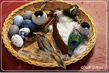 Bird Study / by Nikki Rosenzweig Hinkle