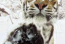 Amazing Animals! / by Adele McKeon