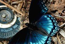 自然 LEPIDOPTERA / Butterflies / Moths. / by Absolem Wimp