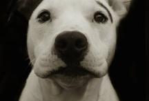 Love my dog / by Paula Sciuk