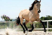 Horse love kinda thing... / by Nina Shaw